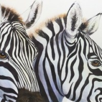 Zebras Up Close AE
